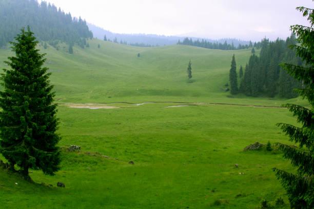 Poiana Ponor, Padis, Apuseni Natural Park, Romania stock photo