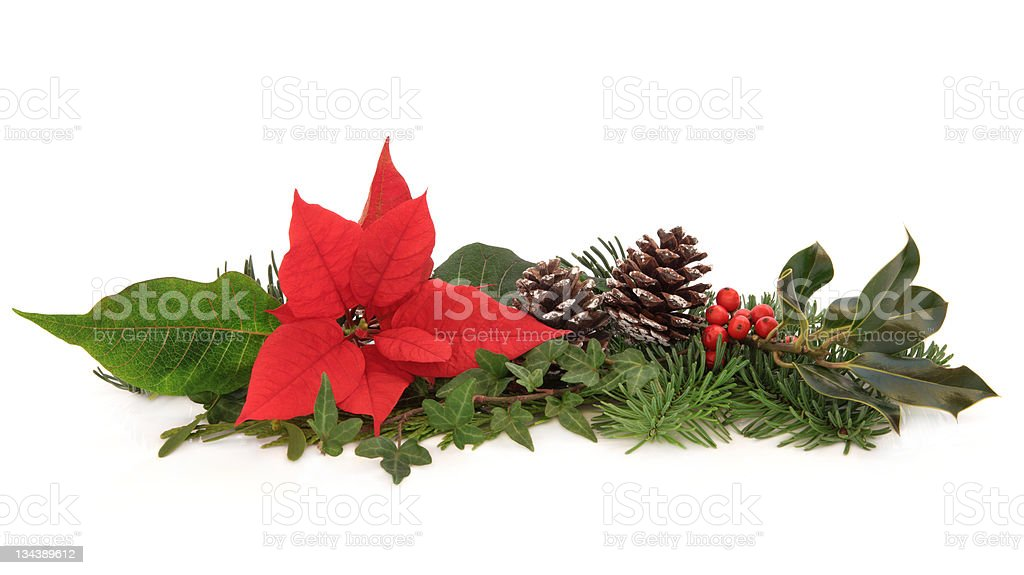Poinsettia and Winter Fauna royalty-free stock photo