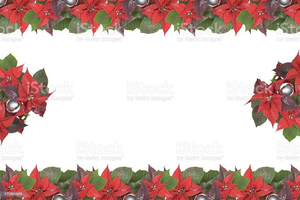 Flor de nochebuena, Navidad flor (tamaño de imagen XXL foto de stock libre de derechos