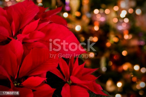 Poinsettias against defocused Christmas lights & decor. Focus on extreme foreground.