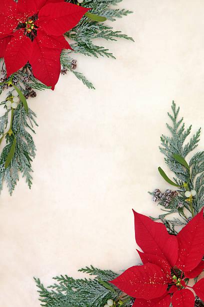 weihnachtsstern-blumen-grenze - weihnachtssterne aus papier stock-fotos und bilder