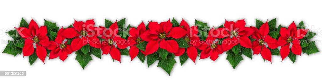 Julstjärna blomsterkrans bildbanksfoto
