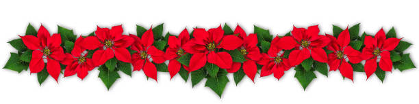 Poinsettia flower wreath stock photo