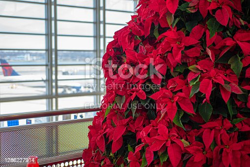 Arlington, Virginia, USA - December, 7, 2019: Poinsettia tree decoration on airport and airplane background.  Christmas time travel concept.