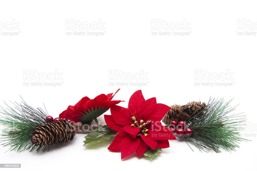 Poinsettia with fir branches royalty-free stock photo
