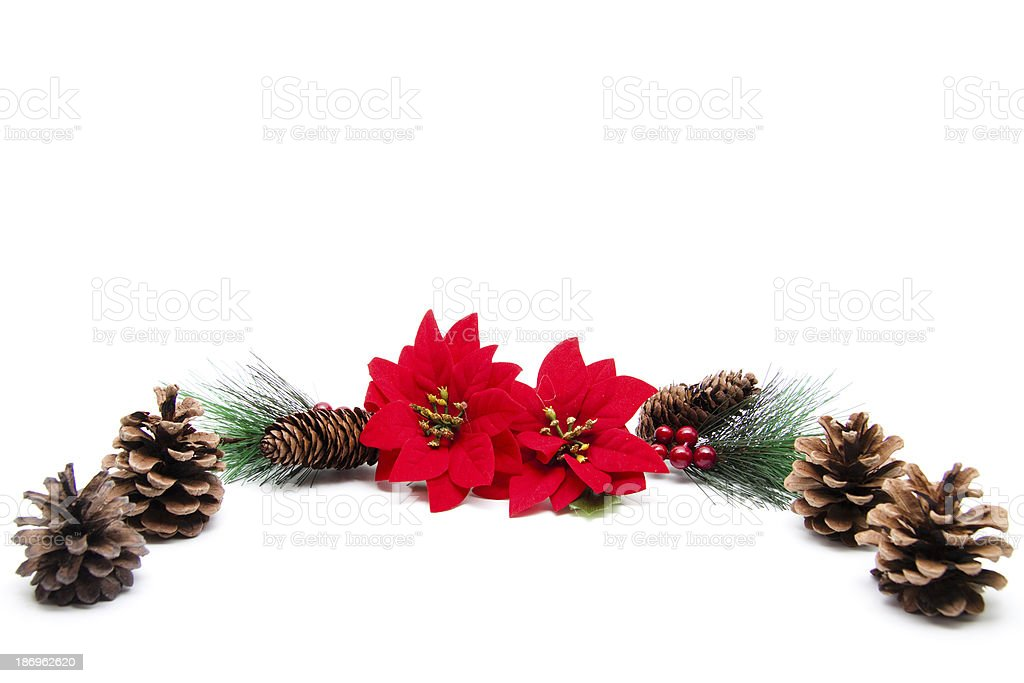 Poinsettia with pine cone royalty-free stock photo