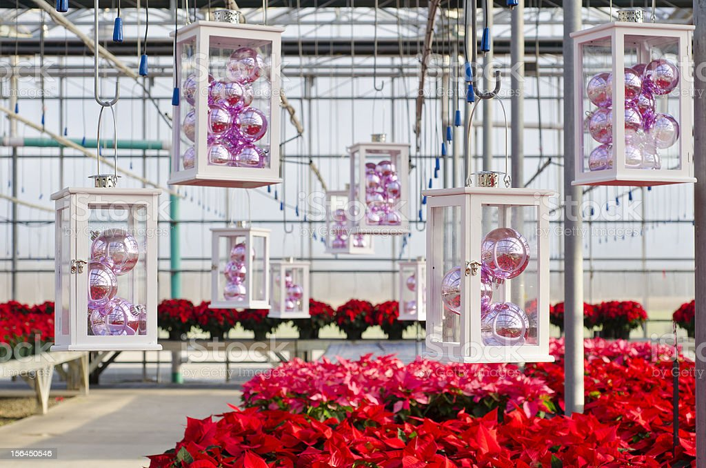 Poinsettias and Christmas Decorations stock photo