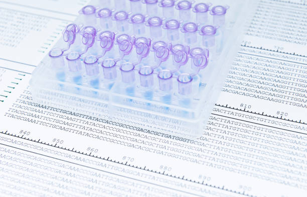 Point mutation in DNA gene Analysis of amplified DNA sequence for detect Point mutation in DNA gene nucleotide stock pictures, royalty-free photos & images