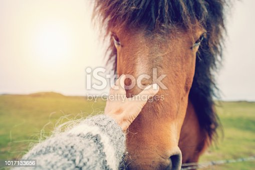 Caucasian female in Iceland petting Icelandic horse in green meadow. Shot in Springtime, overcast sky. People travel animal affection concept