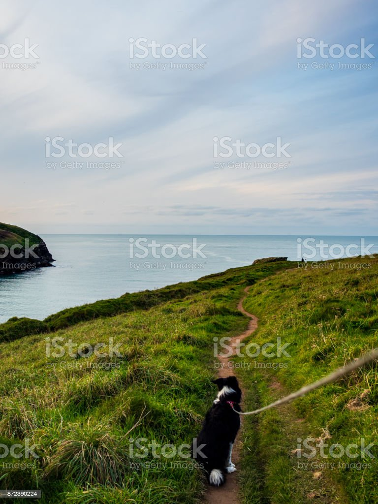 point of view walking a border collie stock photo