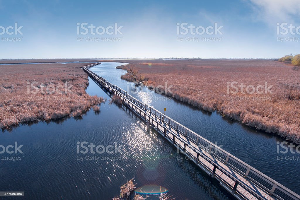 Point Pelee Marsh Boardwalk stock photo