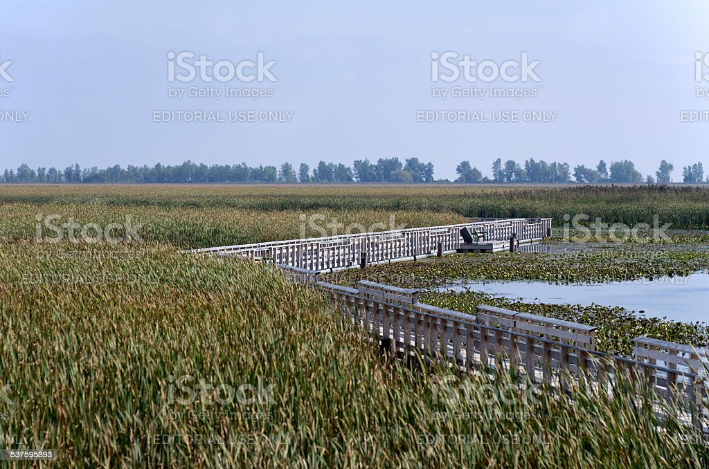 Point Pelee National Park Marsh stock photo