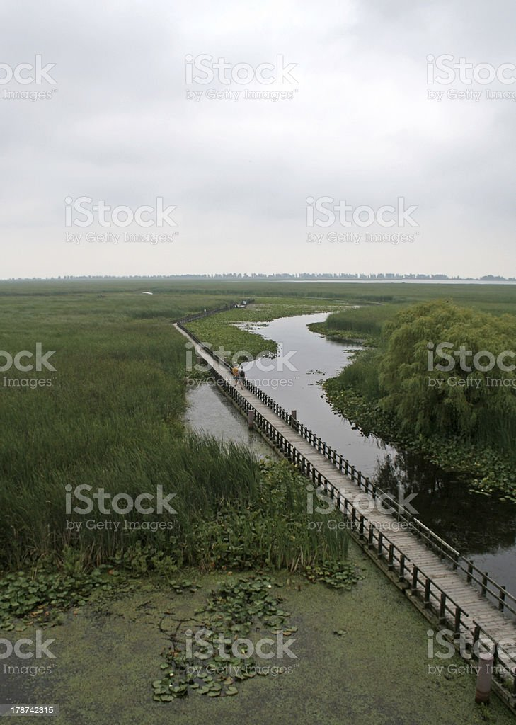 Point Pelee Swamp Boardwalk royalty-free stock photo