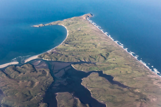 point reyes - dally stock pictures, royalty-free photos & images