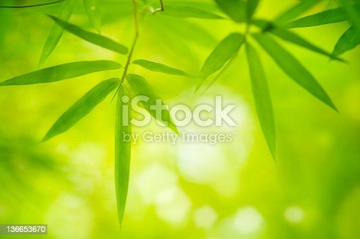 Close up bamboo leaves with copy space on bottom
