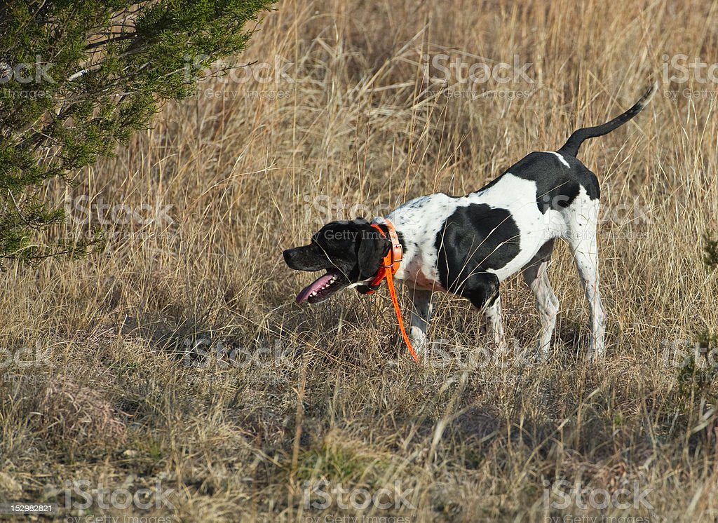 Pointer at point stock photo