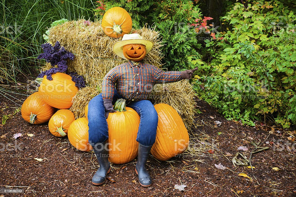Pointing Scarecrow Sitting on a Pumpkin stock photo