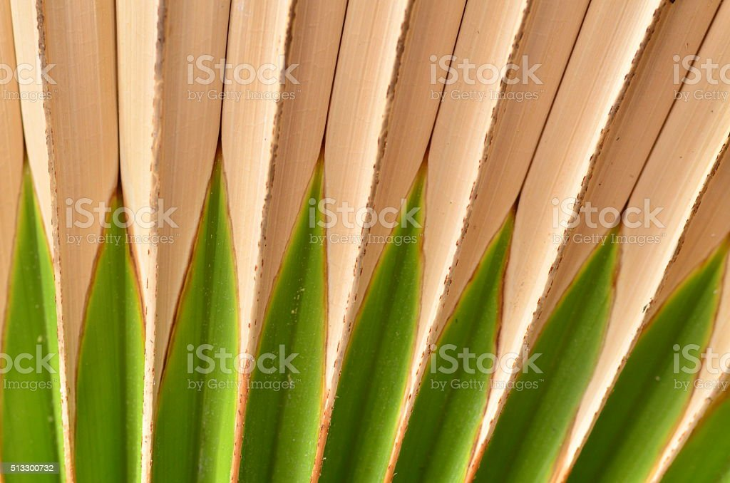 Pointy green new growth emanating from frame bottom stock photo