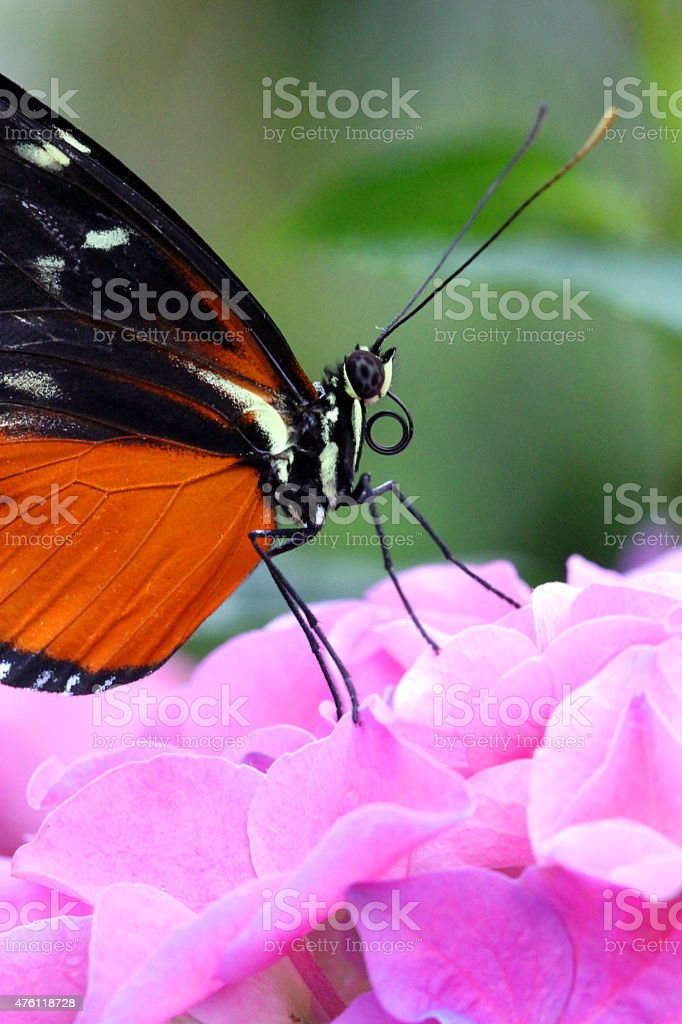 Poised Butterfly stock photo