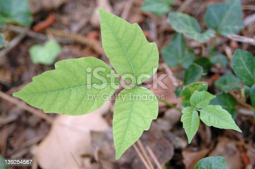 This is poison ivy.  Dont touch.