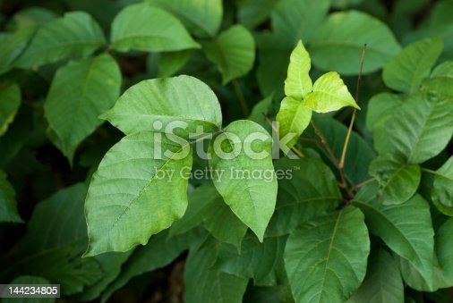flourishing poison ivy is supposedly a byproduct of global warming