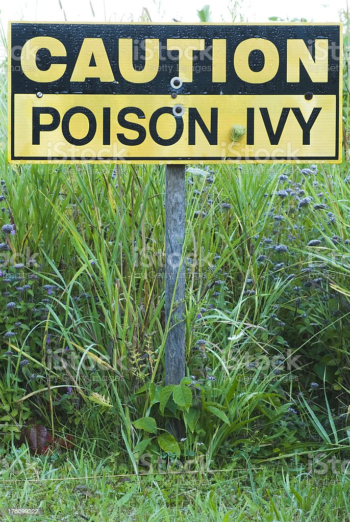 Poison Ivy - sign and plant (Toxicodendron radicans) royalty-free stock photo
