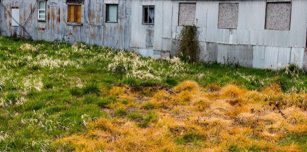 Poisoned distressed tall grass turning various shades of yellow, orange, red, and green behind a dilapidated rusty tin building stock photo