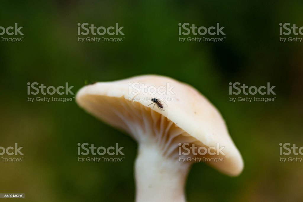 Poisonous forest mushroom close-up of a blurred dark background. stock photo