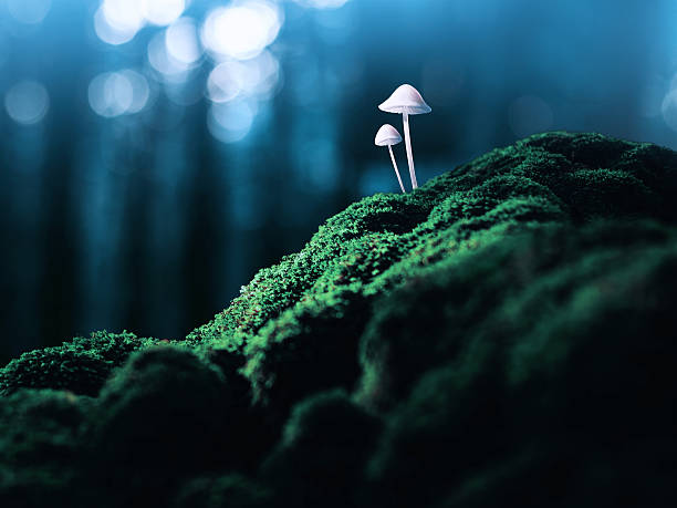 Poisonous mushrooms in the faraway forest Concept and ideas. Dangerous plant deleterious stock pictures, royalty-free photos & images