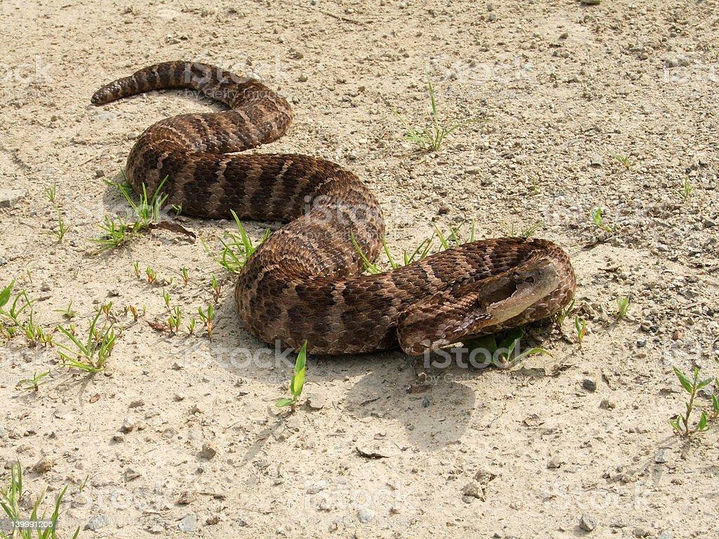 Poisonous snake stock photo