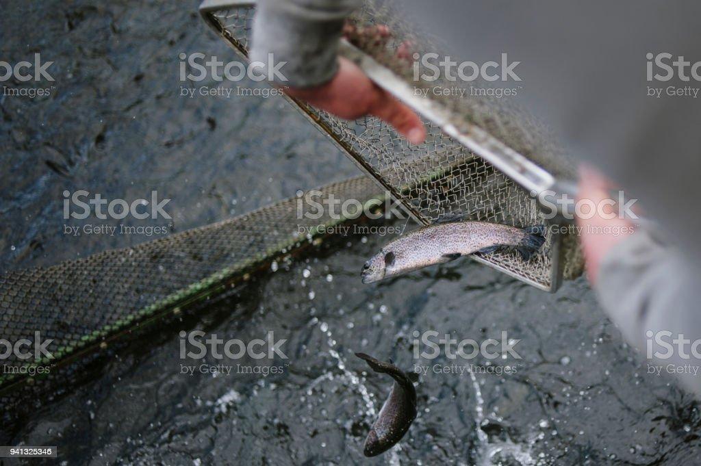 poisson dans l'épuisette stock photo