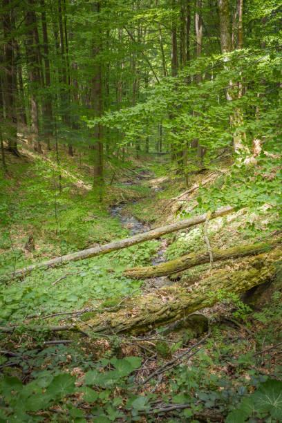 Poland. Bieszczady Mountains. The trail to Duszatynskie Lakes. stock photo