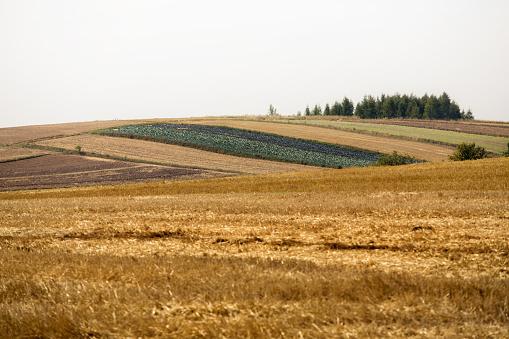 Poland Countryside - Fotografie stock e altre immagini di Agricoltura