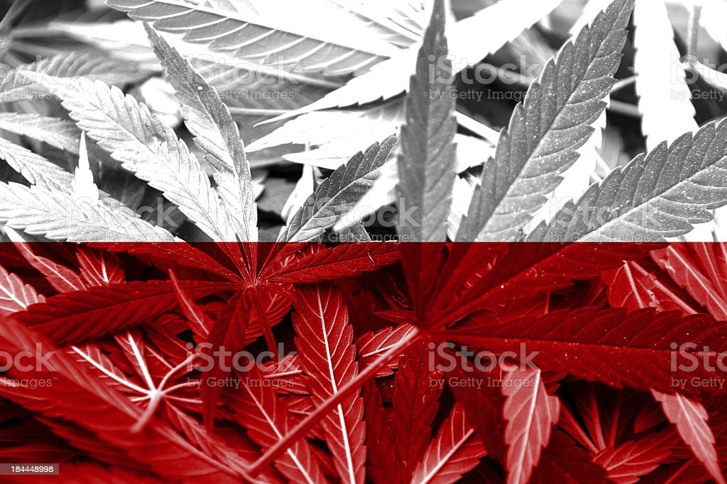 Poland Flag on cannabis background. Drug policy royalty-free stock photo