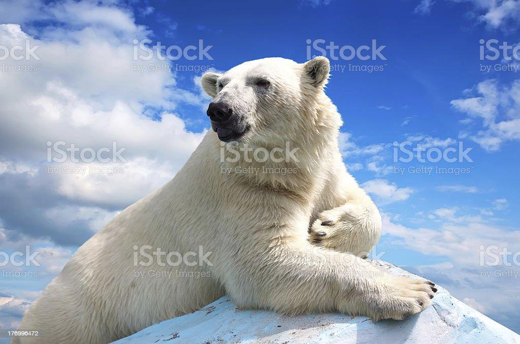 polar bear against sky royalty-free stock photo
