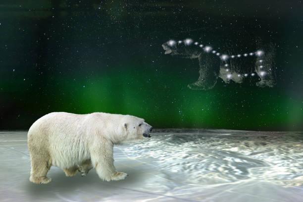constellation de l'ours polaire et de la grande ourse d'ursa major. éléments de cette image fournis par la nasa. - grande ourse photos et images de collection