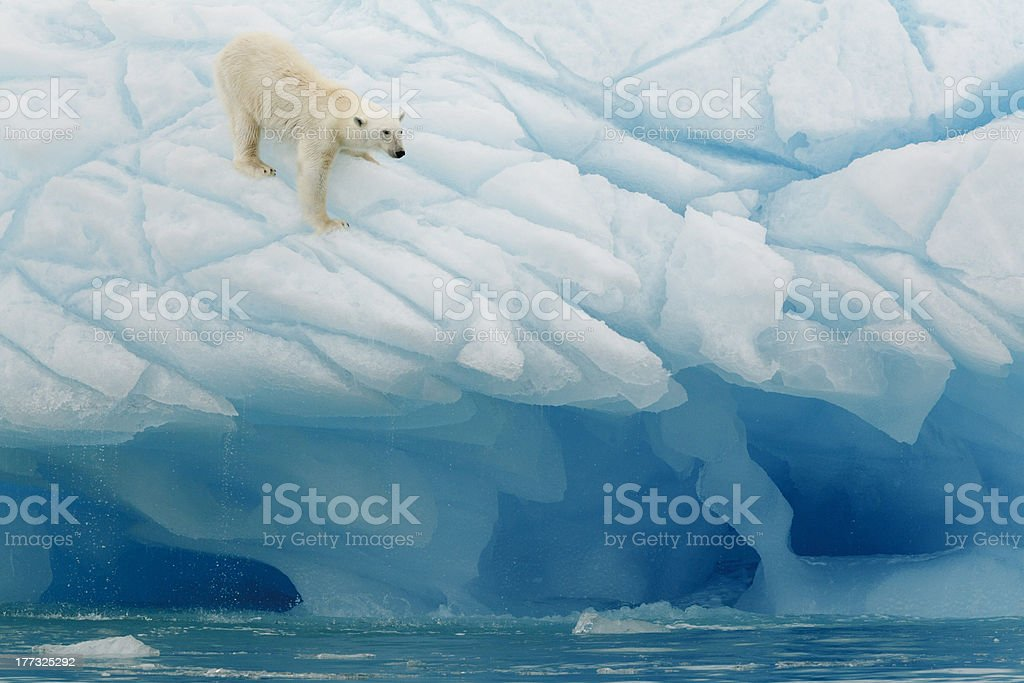 Polar Bear Balancing stock photo