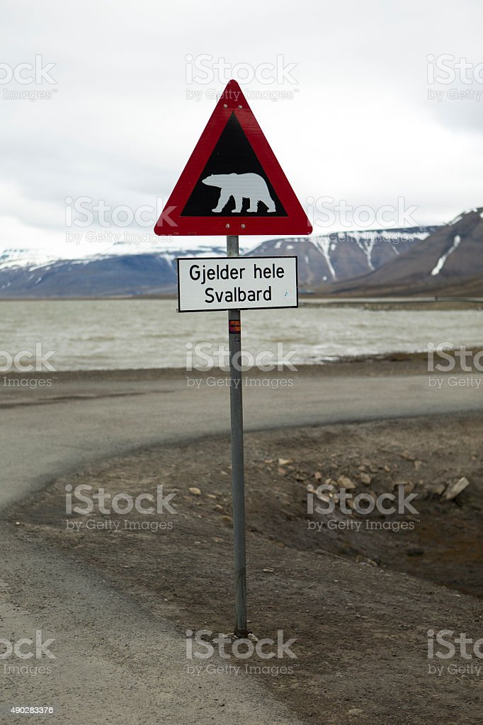 Polar bear crossing stock photo