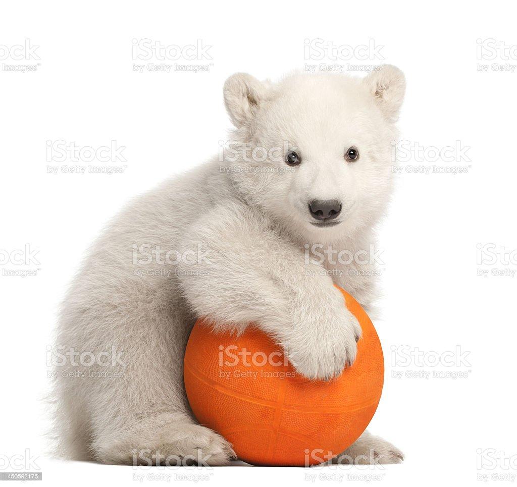 Polar bear cub, Ursus maritimus, 3 months old stock photo
