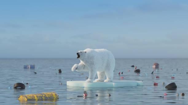 Polar bear global warming concept picture id1133630907?b=1&k=6&m=1133630907&s=612x612&w=0&h=luwuestfbzrbb rnooivgkswrcycqob5ll4gsraygo0=