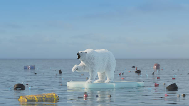 Polar bear global warming concept Polar bear global warming concept ice floe stock pictures, royalty-free photos & images