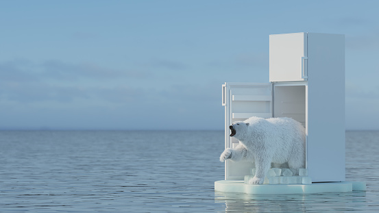 Polar bear global warming concept