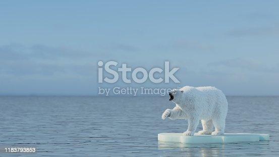 Polar bear in Svalbard , Arctic.