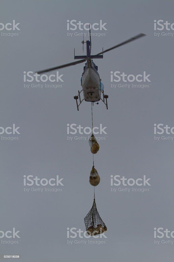 Polar Bear Helicopter lift stock photo
