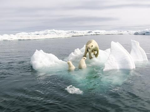 북극의 북극곰 겨울에 대한 스톡 사진 및 기타 이미지