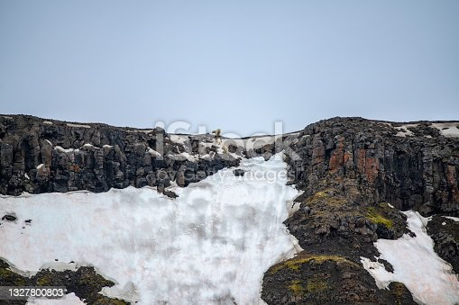 istock A polar bear mother with her two cubs (Ursus maritimus) reaches the mountain-crest after treking across a large snowpatch on a steep, rocky slope, 1327800803