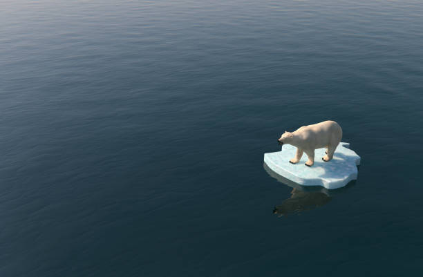 polar bear on a little iceberg - iceberg ice formation stock pictures, royalty-free photos & images