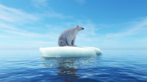 Polar bear on a piece of iceberg . Global warming concept . This is a 3d render illustration . stock photo