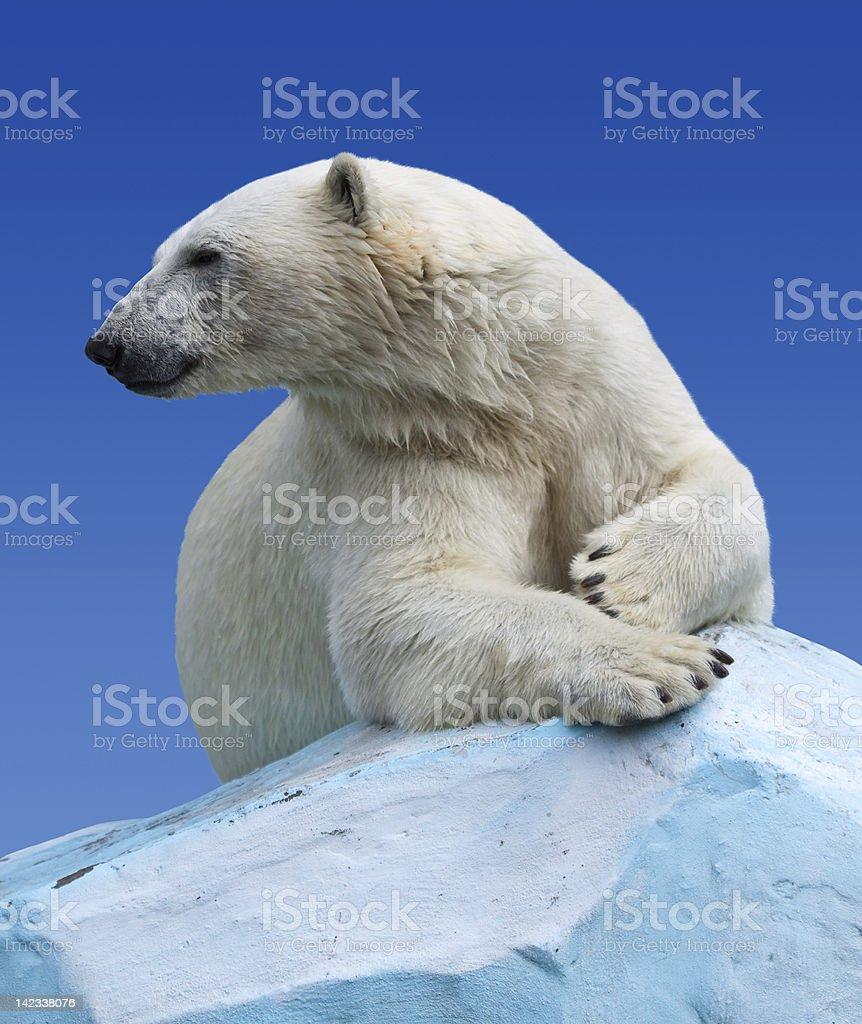 Polar bear on a rock against blue sky royalty-free stock photo
