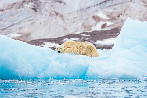 Polar Bear On An Iceberg - Fotografie stock e altre immagini di Acqua